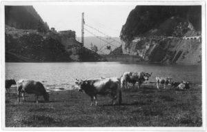 1923.06.16_Alt-Waeggithal_Kuehe_vor-Staumauer